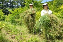 苗畑の除草作業