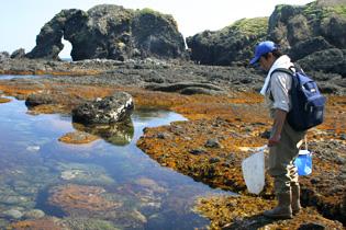 海の調査風景