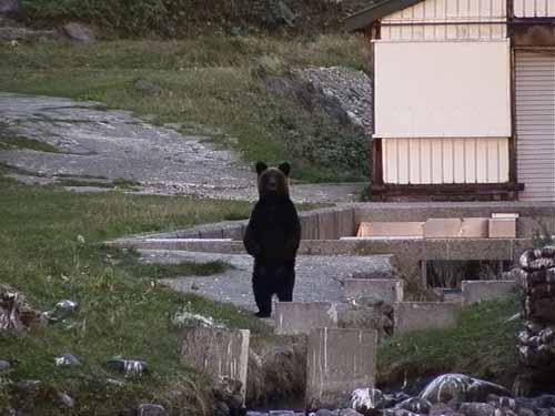 熊立ち上がる
