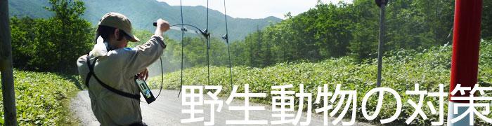 カテゴリー  お知らせ(ヒグマ)