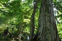 河畔林とそこに暮らす生き物たちを復元するプロジェクト