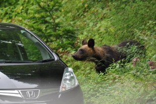 無人車両の車内を覗き込むクマ