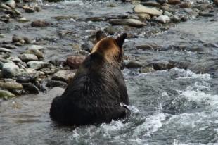 マスを捕食するクマ