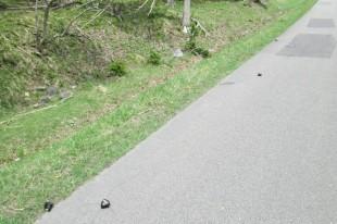 道路に点々と棄てられた?おむすび。
