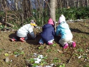 木の根元で虫を探す児童たち