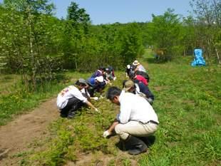 トドマツの幼樹を育てている苗床の除草作業の様子