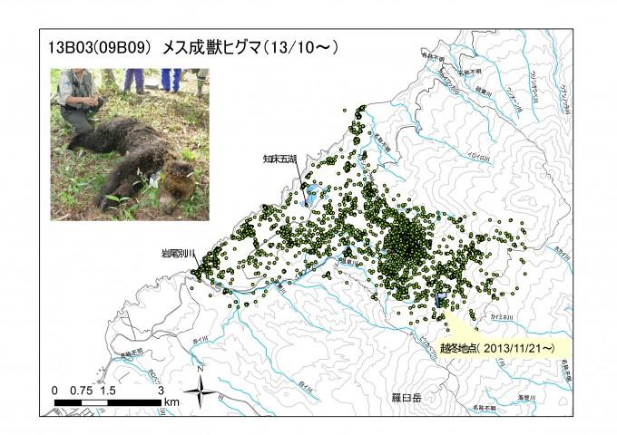 ヒグマ(個体ID:13B03)の行動圏を示した図です。1点1点がヒグマのいた場所を示しています。 おおよそ岩尾別川からイダシュベツ川までを行動範囲にしていることがわかります。