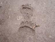 地上遊歩道ヒグマ足跡