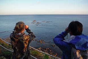 シホテアリン保護区内のゴマフアザラシ上陸岩礁を観察