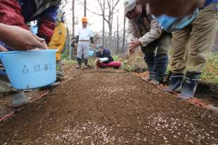 運動地内で採取したアカエゾマツの種子。苗畑で育てて、いずれ柵外に移植します。