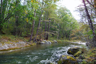 シホテアリン保護区内の広葉樹林を流れるカワウソ生息河川