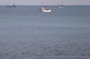小型イカ釣り漁船とトドの群れ(右下)