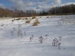 シカ柵内の様子。これから来る本格的な冬を越え、春には花が咲くでしょう。