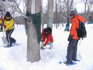 風雪などによって、破けてしまった樹皮保護ネット。