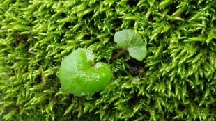 河岸の巨石に生えたコケの上の草。キラキラしていました。