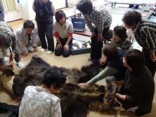 ヒグマ学習教材トランクキットで熱心に学習するこまぐさ学級の参加者