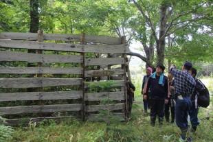設置から15年ほど経過した柵の中は、木々が生い茂っています。