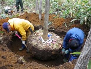 土はつけすぎると重過ぎ、少なすぎると根付きにくい。