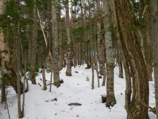 柵内、森の中の様子。すっかり冬の森です。ルートがどこか分かりずらくなりました。