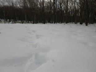 雪の上を歩いた人間の足跡。これからの季節、アニマルトラッキング(動物の足跡探し)がたのしみです。
