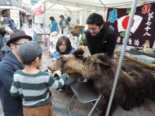 ヒグマの本物の毛皮に恐る恐るさわる子供