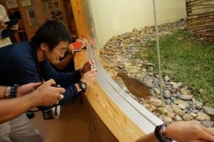 生態展示されているヤンバルクイナです。施設スタッフの解説を聞きながら撮影大会。