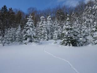 キツネの足跡。動物たちの自然な動きが分かるのも冬の楽しみ!
