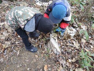 虫が隠れていそうな枯れ木を見つけた。この下からヒシバッタの一種が出てきた。