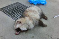 野生動物の交通事故注意!
