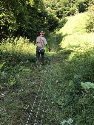 電気柵沿いを草刈り中