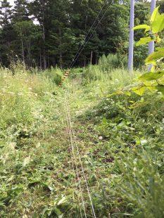 草刈り後の様子、電圧が正常に戻りました