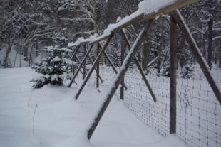 積雪期でもエゾシカが越えられないように柵は3m以上の高さが必要になる