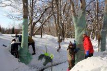冬の森づくり ~ボランティアの皆さんの力~