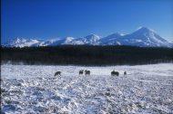 冬のフレぺの草原