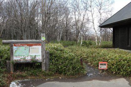 フレペの滝遊歩道内でヒグマに追跡される事例が発生  Trekkers were chased by a brown bear at the Furepe Waterfall trail.