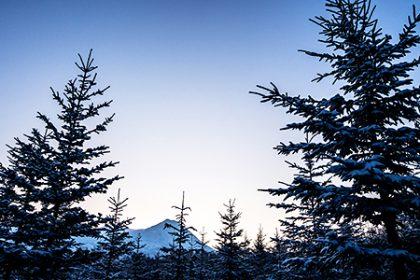 冬期「森づくりボランティア」活動報告