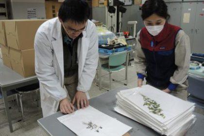 「フレぺの滝遊歩道周辺の植物リスト」が知床博物館研究報告 第42集に掲載されました